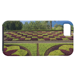 Portugal, Madeira Island, Funchal. Botanical iPhone 5 Covers