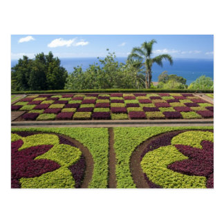 Portugal, Madeira Island, Funchal. Botanical Postcard