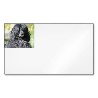 portugese water dog.png magnetic business card