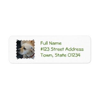 portuguese-pointer-1.jpg return address labels