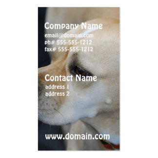 Portuguese Pointer  Business Cards