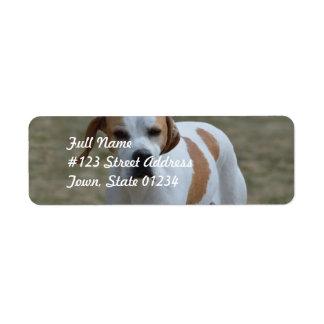 Portuguese Pointer Dog Return Address Labels