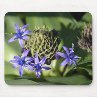 Portuguese Squill Blue Flower Mousepads