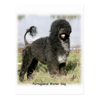 Portuguese Water Dog 9Y154D-030 Postcard
