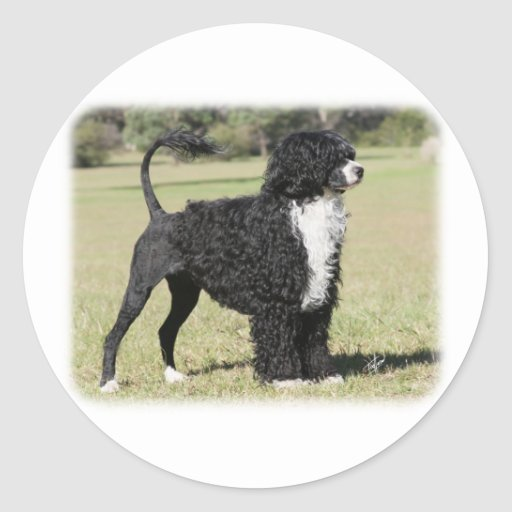 Portuguese Water Dog 9Y510D-145 Classic Round Sticker