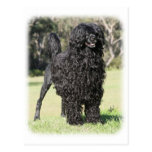 Portuguese Water Dog 9Y510D-338 Post Cards