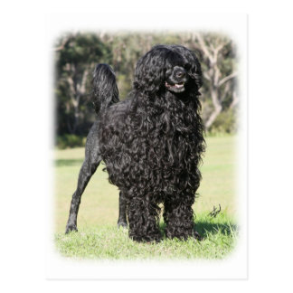 Portuguese Water Dog 9Y510D-338 Postcard