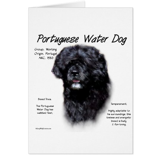 Portuguese Water Dog History Design Card