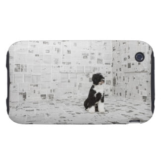 Portuguese Water Dog in room covered in iPhone 3 Tough Cover