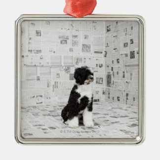 Portuguese Water Dog in room covered in Metal Ornament