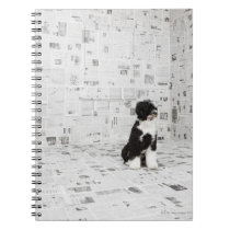 Portuguese Water Dog in room covered in Notebook