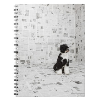 Portuguese Water Dog in room covered in Spiral Notebook