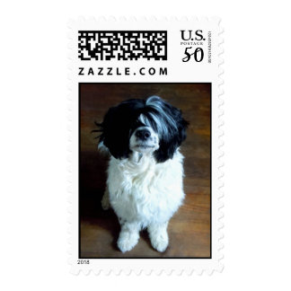 Portuguese Water Dog photo postage stamp