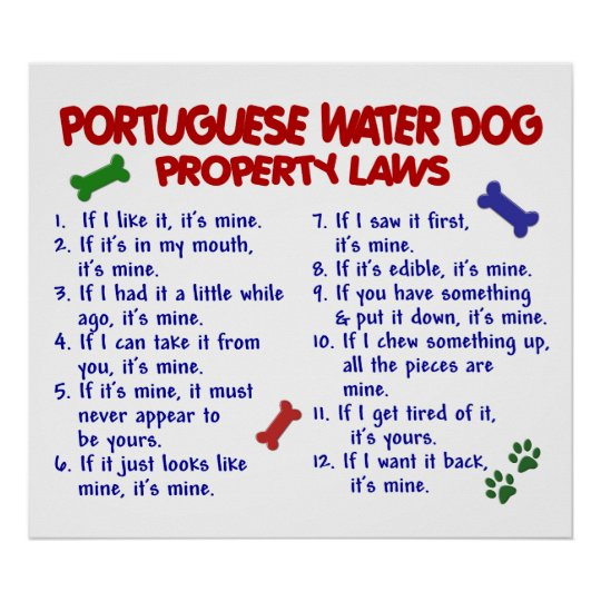 PORTUGUESE WATER DOG PL2 POSTER