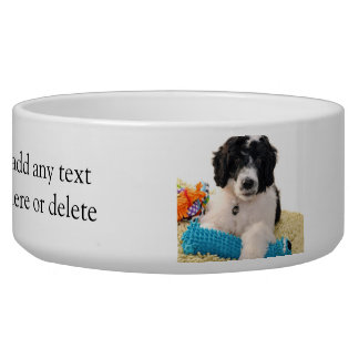 Portuguese Water Dog Puppy With Toys Bowl