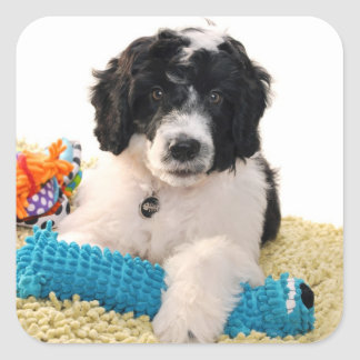 Portuguese Water Dog Puppy With Toys Sticker