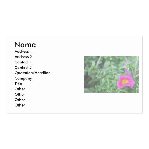 Portulaca dark pink flower green back faded business card template