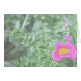 Portulaca dark pink flower green back faded cards