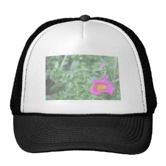 Portulaca dark pink flower green back faded mesh hat