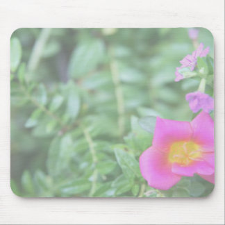 Portulaca dark pink flower green back faded mousepads
