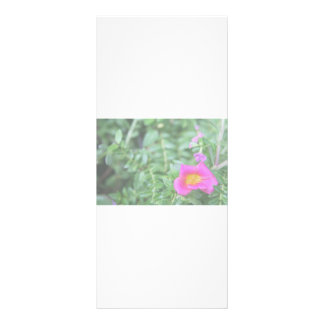 Portulaca dark pink flower green back faded full color rack card