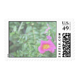 Portulaca dark pink flower green back faded stamp