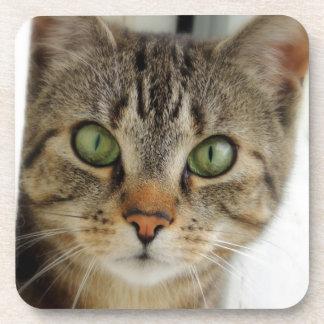 posavasos de corcho gatos