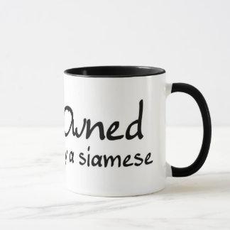 poseído por un siamés taza