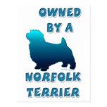 Poseído por una Norfolk Terrier Tarjeta Postal