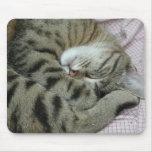 Posición torpe el dormir del gato