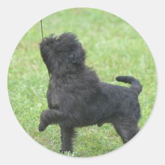 Posing Affenpinscher Round Stickers