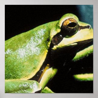 Posing Frog Poster