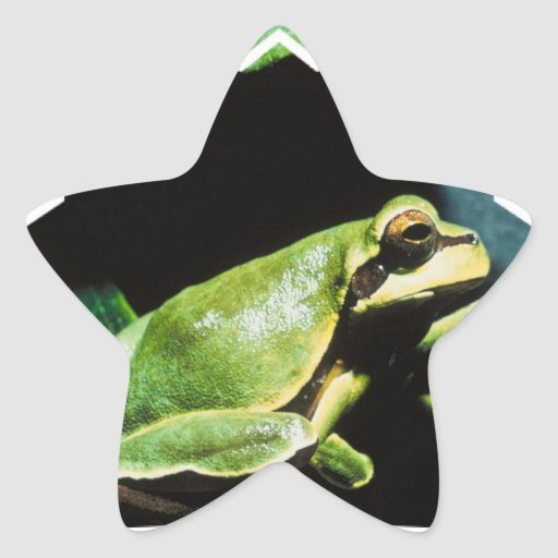 Posing Frog Stickers