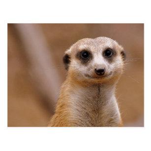 Postcard All good meerkats