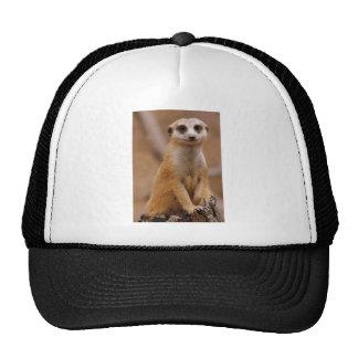Posing Meerkat Trucker Hat