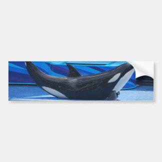 Posing Orca Bumper Sticker Car Bumper Sticker