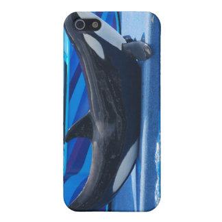 Posing Orca iPhone Case iPhone 5 Case