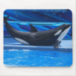 Posing Orca Mouse Pad