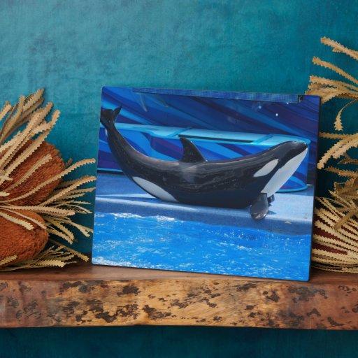 Posing Orca Plaque