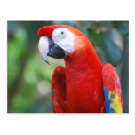 Posing Parrot Postcard