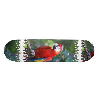 Posing Parrot Skateboard