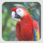 Posing Parrot Stickers