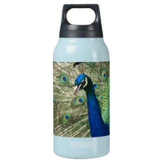 Posing Peacock Insulated Water Bottle
