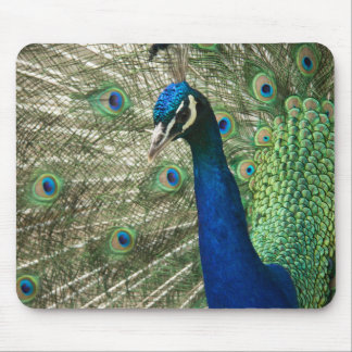 Posing Peacock Mouse Pad