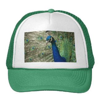 Posing Peacock Trucker Hat