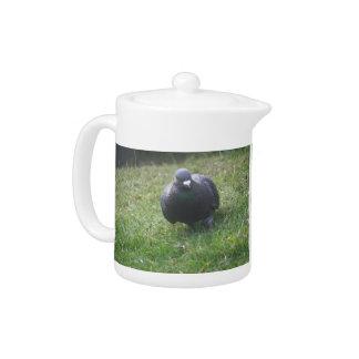 Posing Pigeon Teapot