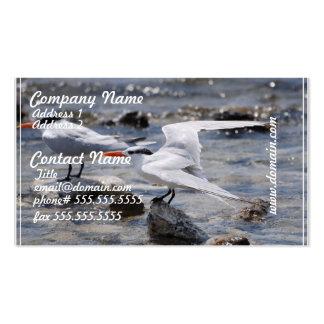 Posing Royal Tern Business Cards