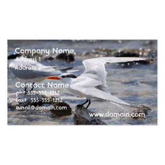 Posing Royal Tern Business Card Templates