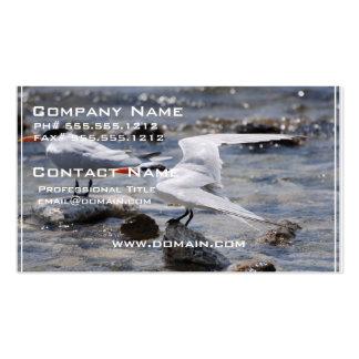 Posing Royal Tern Business Card Template