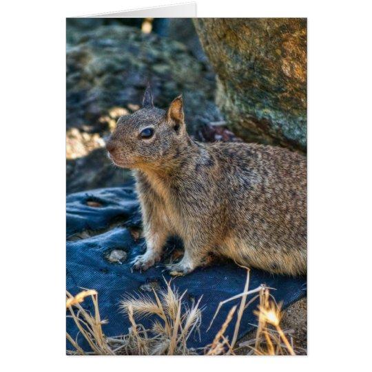 Posing Squirrel Card